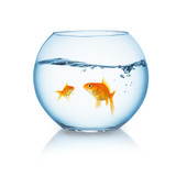 Two Fisches in a fishbowl