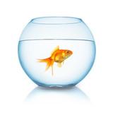 Goldfischglas mit fisch