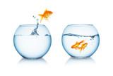 Goldfisch springt zu freunden