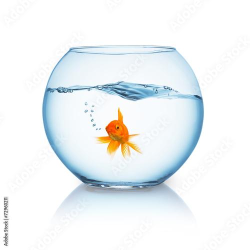 Goldfisch in einer Goldfischkugel