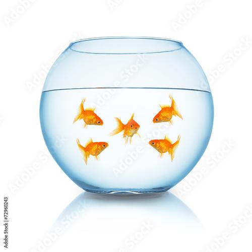 Goldfisch mobbing konzept - 72960243