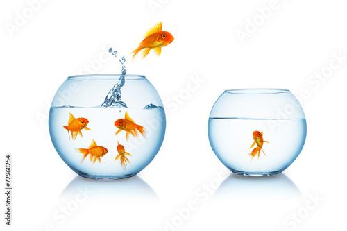 Leinwandbild Motiv gold fish escape in a fishbowl