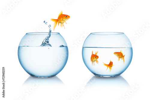 goldfish in fishbowl jumps to friends - 72960259