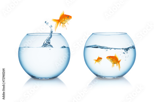 goldfish jumps out of water - 72960264
