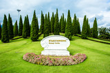 pine trees in  the royal flora  garden chiangmai Thailand