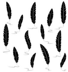 Black writting feathers isolated on white background