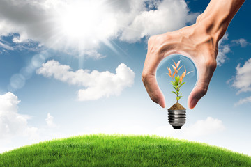 Green energy concept - green tree  in bulb and grass field