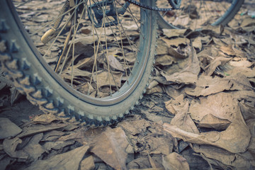 bicycle and autumn dry leaves fall on the ground