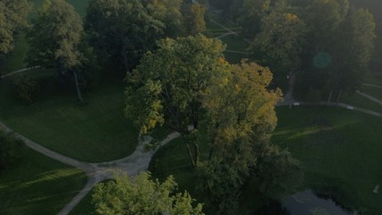 Aerial shot of the forest