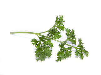 parsley twig