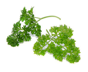 parsley twigs