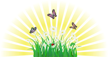vector flower, grass, butterfly and ladybird