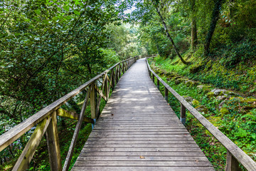 Hiking wooden passage or path through a luxurious forest