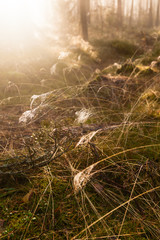 Spider web on grass in the forest