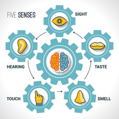 Five senses concept