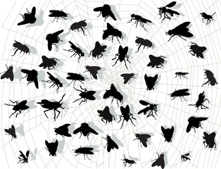 lot of fly silhouettes in spider web isolated on white