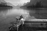 Trunk in Spirit island in Maligne Lake. Jasper. Canada poster