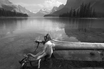 Trunk in Spirit island in Maligne Lake. Jasper. Canada