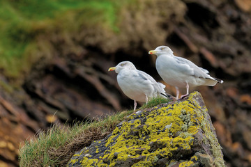 Two seagulls sitting on the rock