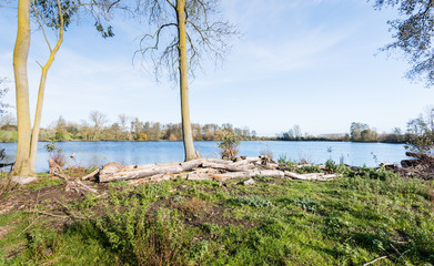 Felled trees on the shore of a lake