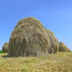 Hay in stacks