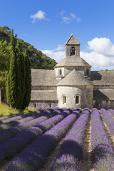 Abbey of Senanque and lavender field. France.