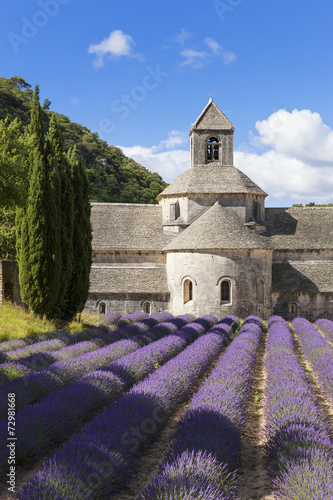 Abbey of Senanque and lavender field. France. - 72981668
