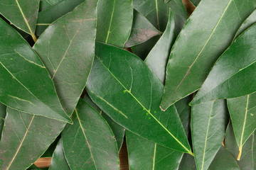 Background of bay leaves.