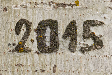 Fecha Año 2015 Grabada en la Corteza de un Arbol