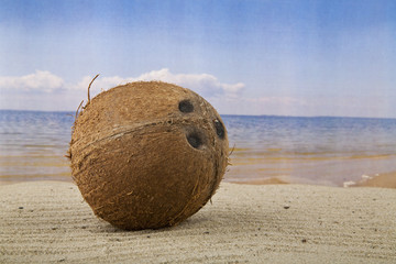 Coconut on the sand