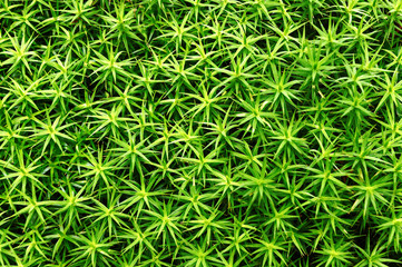 background of plant leaves pattern