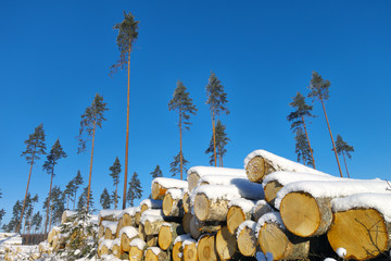 Logging area.