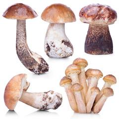 Set of raw mushrooms isolated on white background