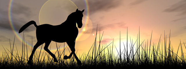 Horse silhouette in grass at sunset banner