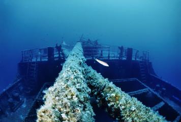Mediterranean Sea, Tunisia, La Galite Islands, sunken ship