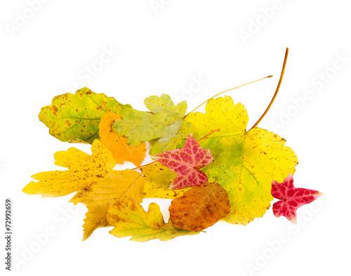 canvas print picture Herbstlaub
