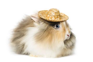 Rabbit wearing a straw hat