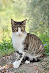 modello felino