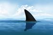 Shark fin above water - 72995894