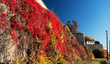 View at Akershus Fortress at fall red leafs