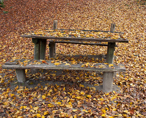 Autumn On The Bench