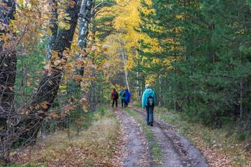 Туристы в осеннем лесу.
