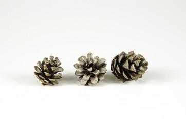 Group of pine tree cones