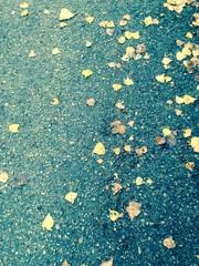 Suelo mojado en otoño
