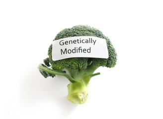 GMO veggie