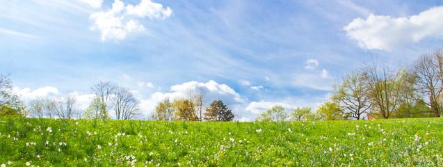 Frühlingswiese mit Bäumen