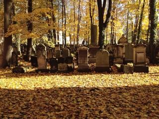 Alter Jüdischer Friedhof in Dresden