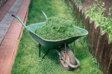 pushcart full of cutted grass