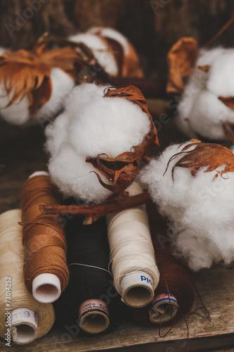 Cotton flower - 73014252