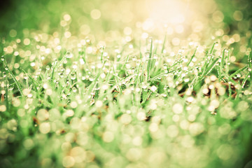grass with droplets and beauty bokeh background